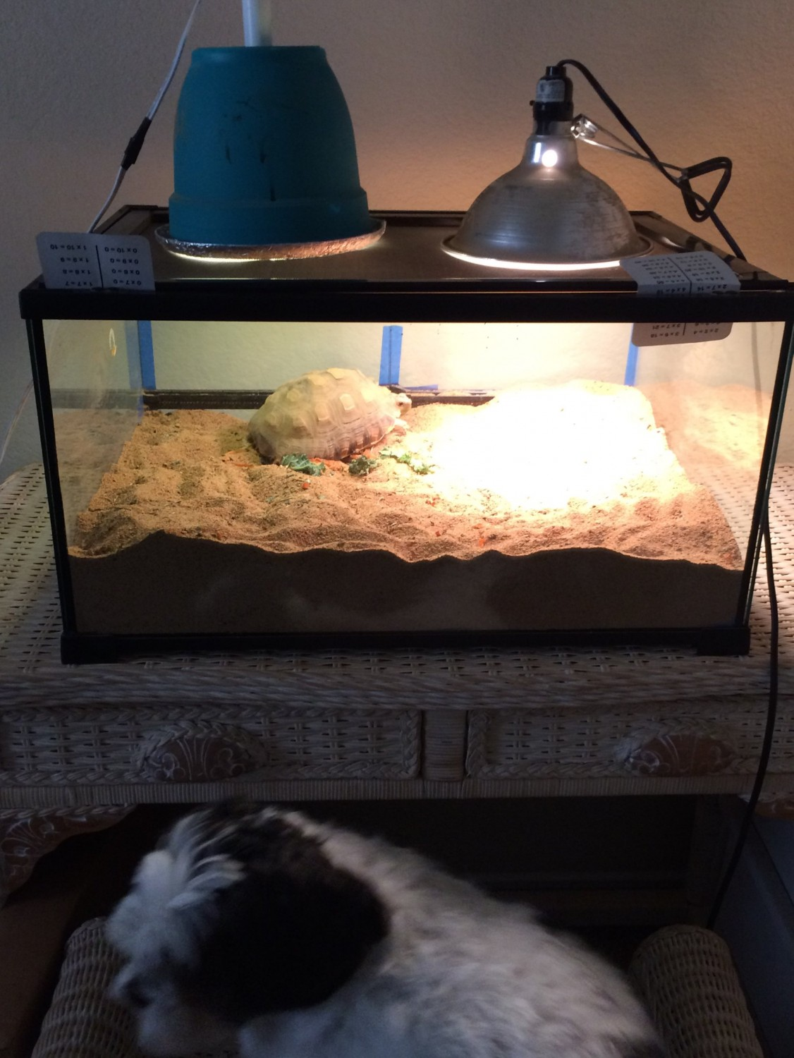 African Spurred Tortoise Reptiles For Sale   Spring, TX ...