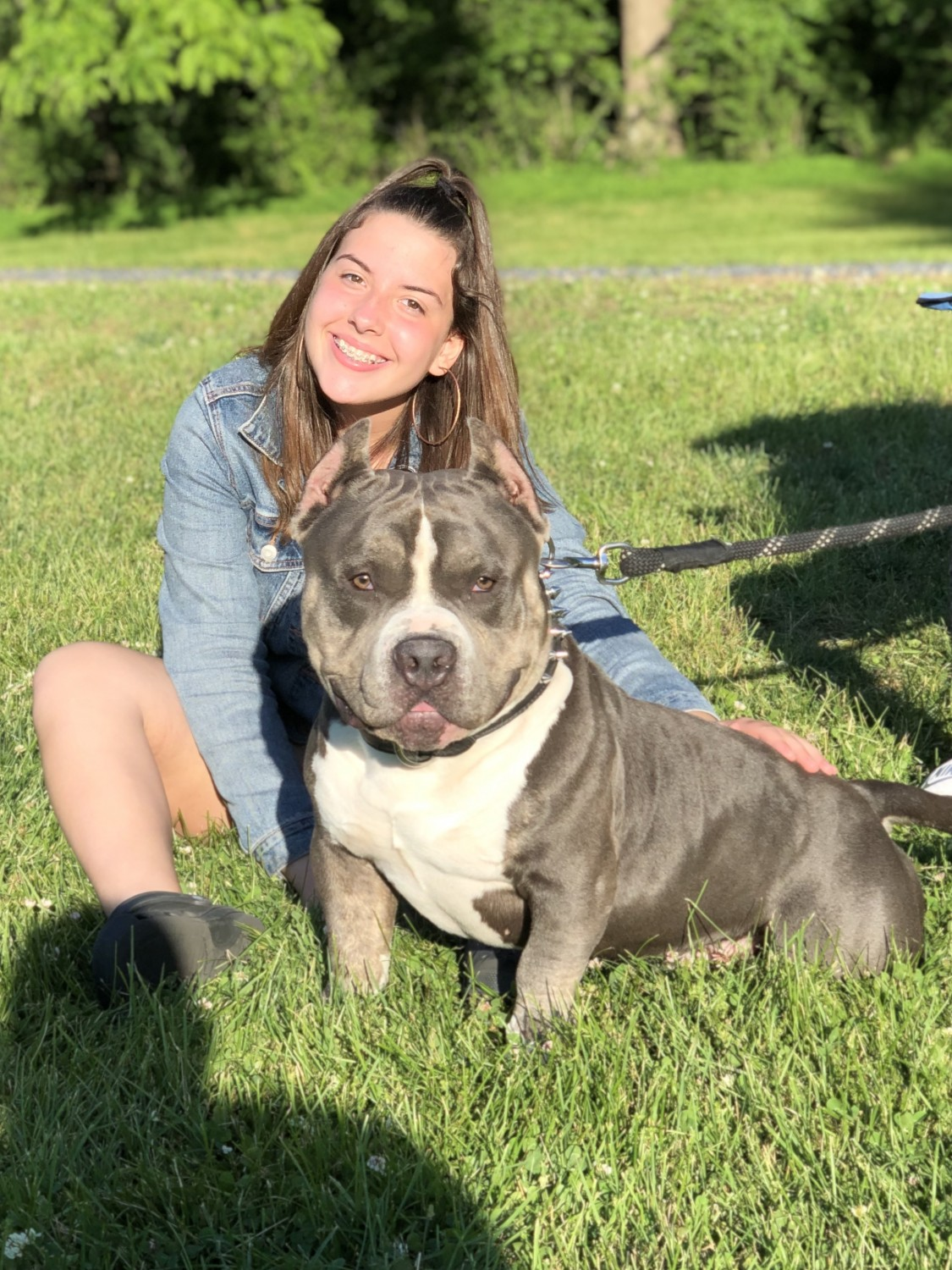 American Bully Puppies For Sale | East Stroudsburg, PA #302272