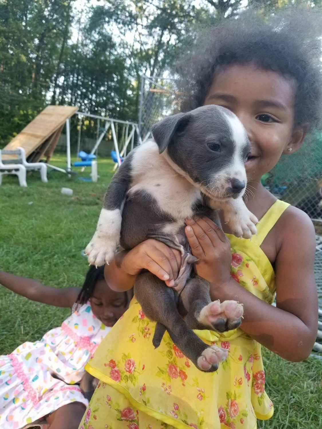 pitbull puppies for sale in indiana american pit bull terrier puppies for sale indianapolis 1024