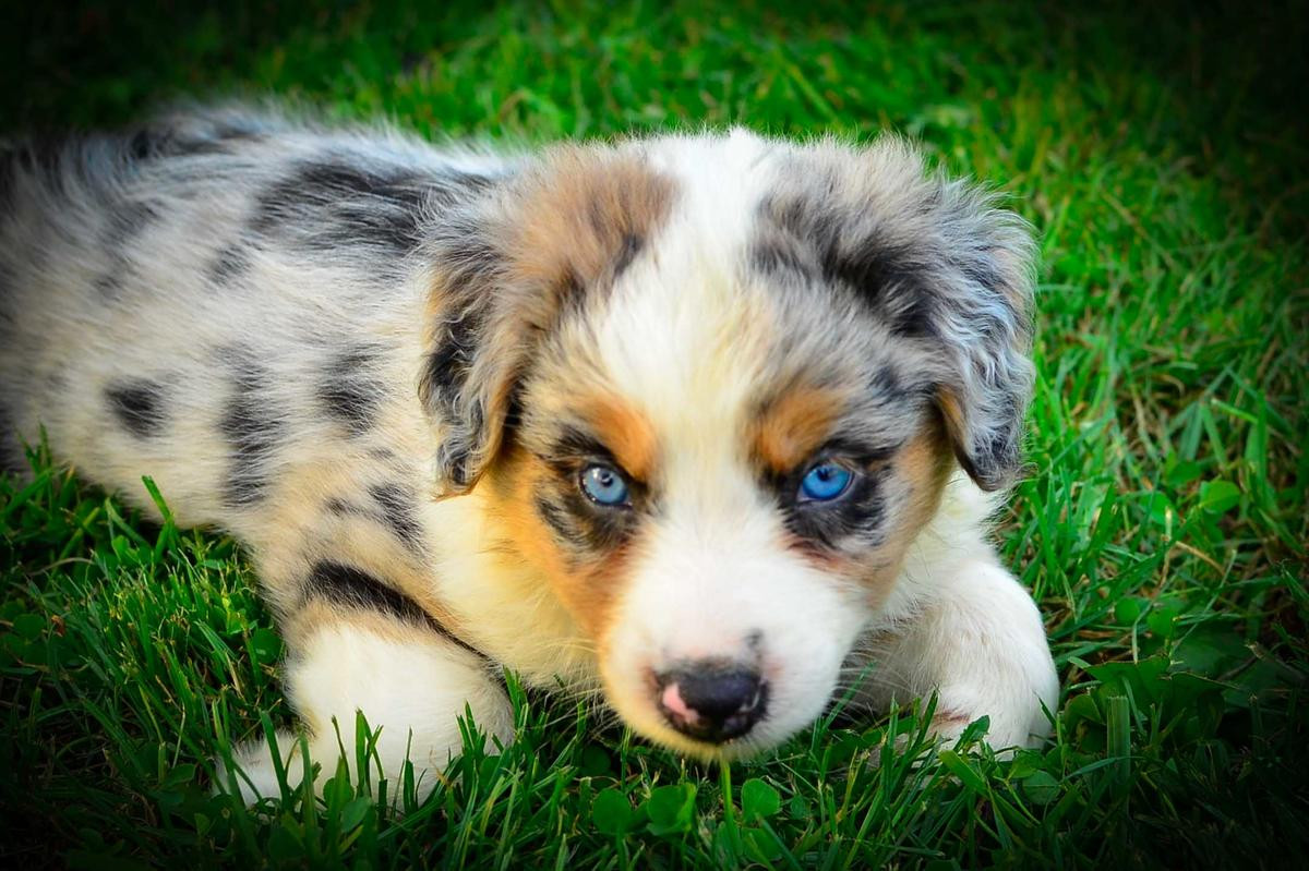 pet lovers dating site australian open Dating pet lovers has never been easier you australian pet lovers now have the ideal dating site for you our must love pets dating site pet loving singles want to hear from you , datingthe.