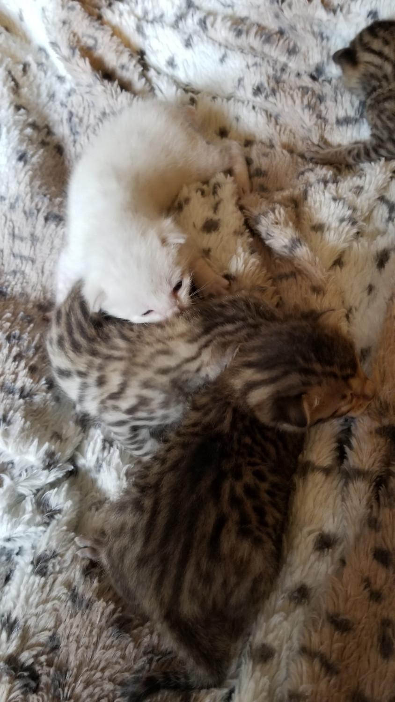 go away cat doormat