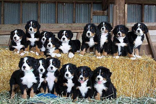 Dog Adoption In Coimbatore