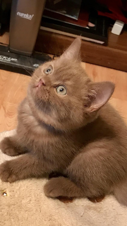 cat behavior guide