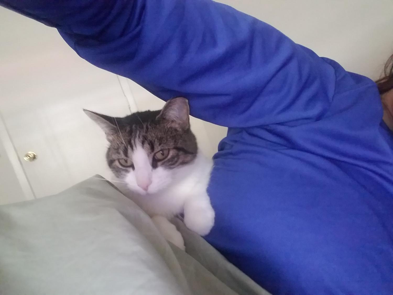 kitten chicago