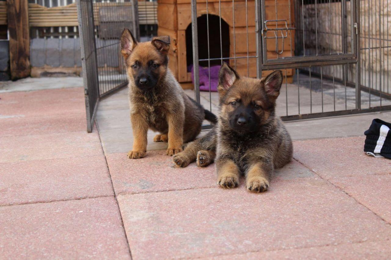 Dog Training In Clayton County Ga