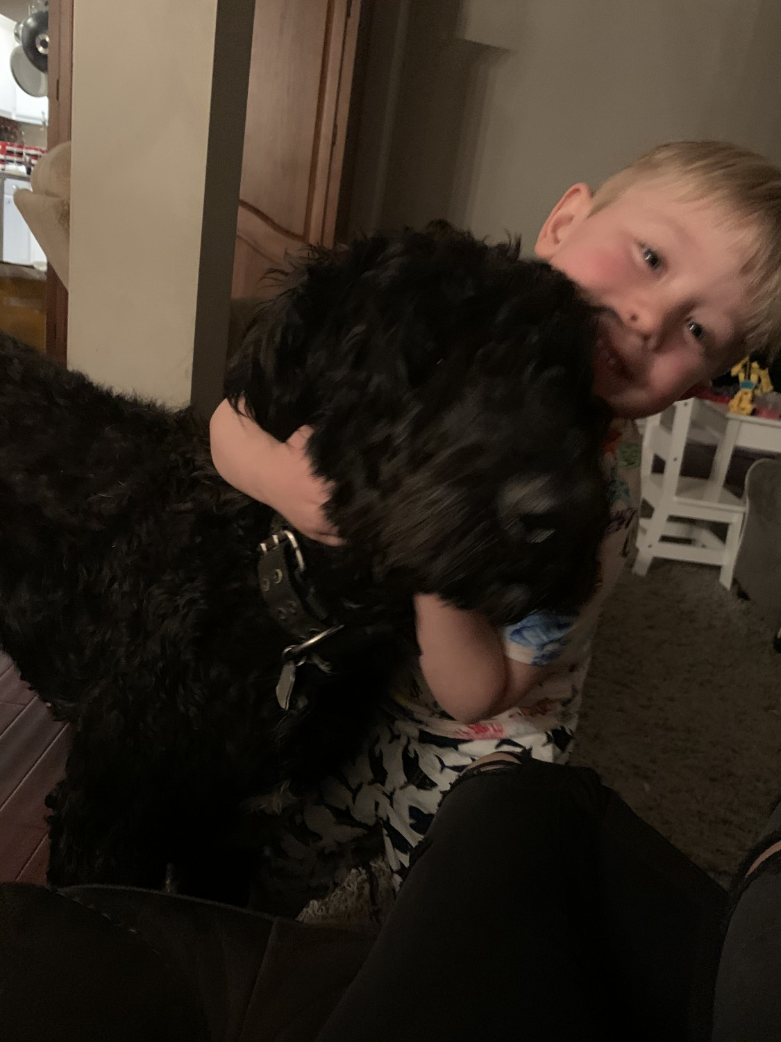 Giant Schnauzer Puppies For Sale | Brentwood, TN #327138