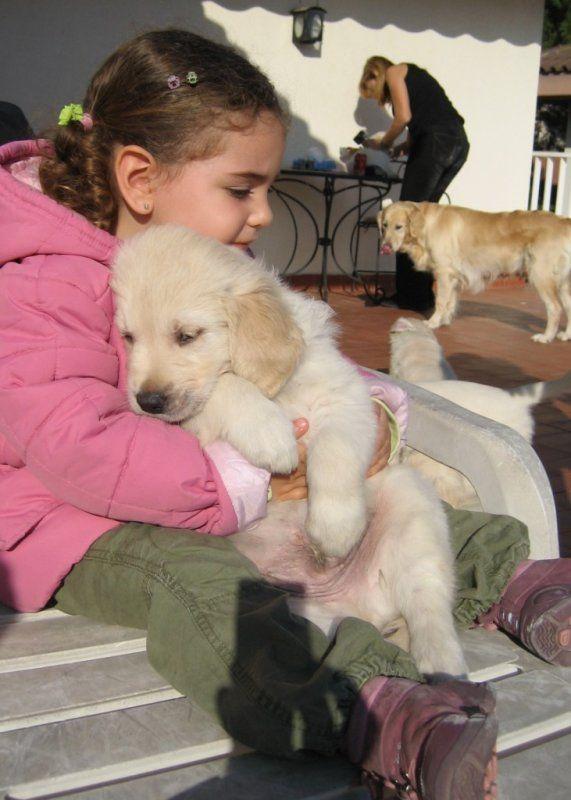 German Shepherd Puppies For Sale in Brooklyn, NY - YouTube
