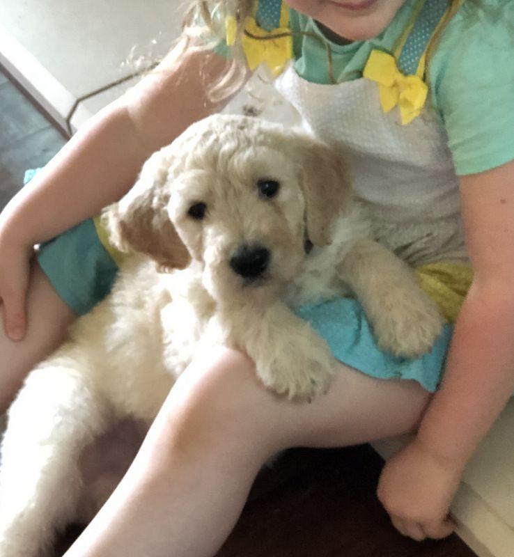 Waco craigslist puppy dogs