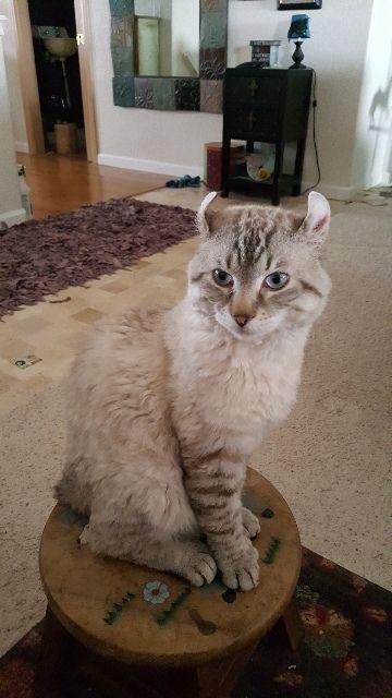 stray cats cat