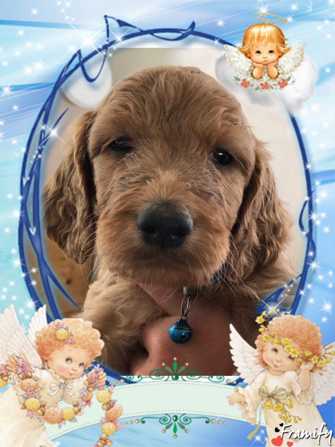 Irish Doodles Puppies For Sale Loveland Oh 282456