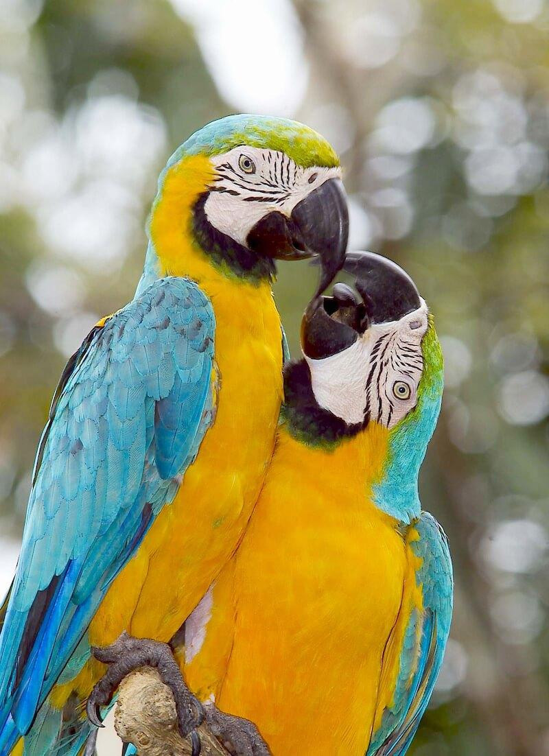 information about parrot bird From the rare whooping crane to common songbirds, learn about birds - our feathered friends and their habitats.