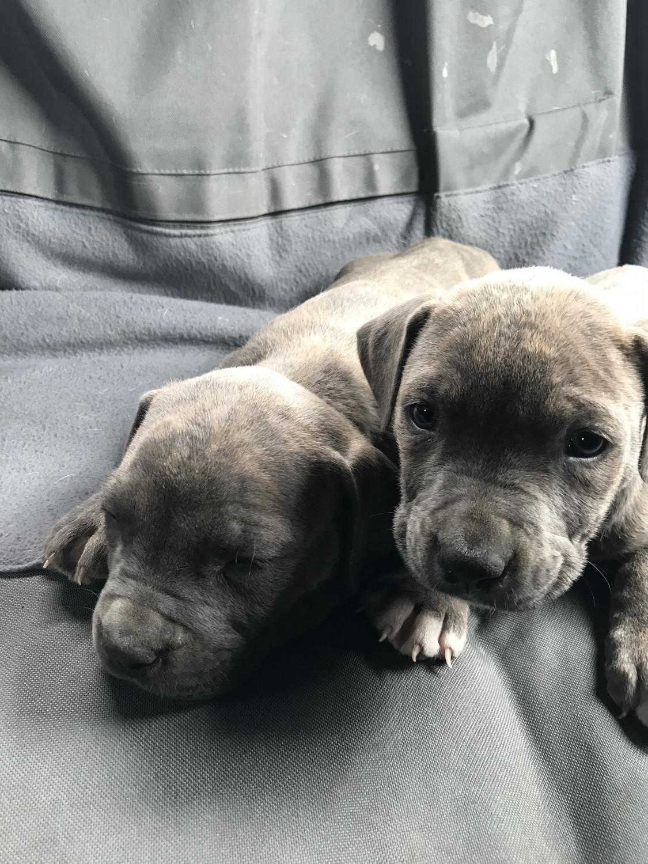 Blue Razor Puppies {Canarias Deportiva}