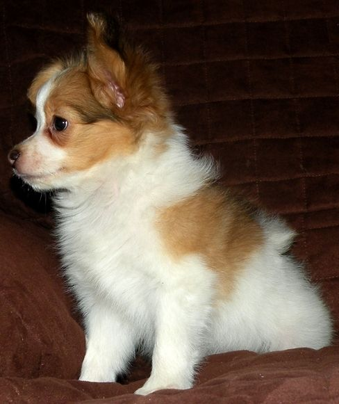 Dogs For Sale In Northeast Pa