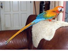 Parrot Birds For Sale | United States of America, Douala