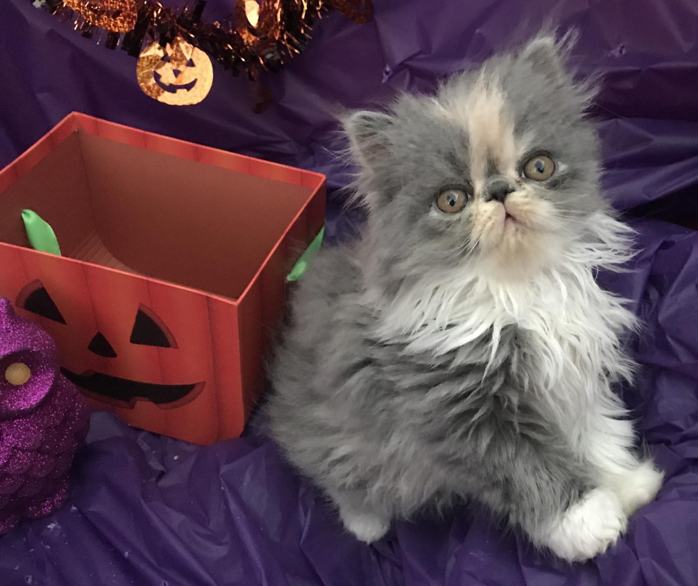 temptations cat treats walmart