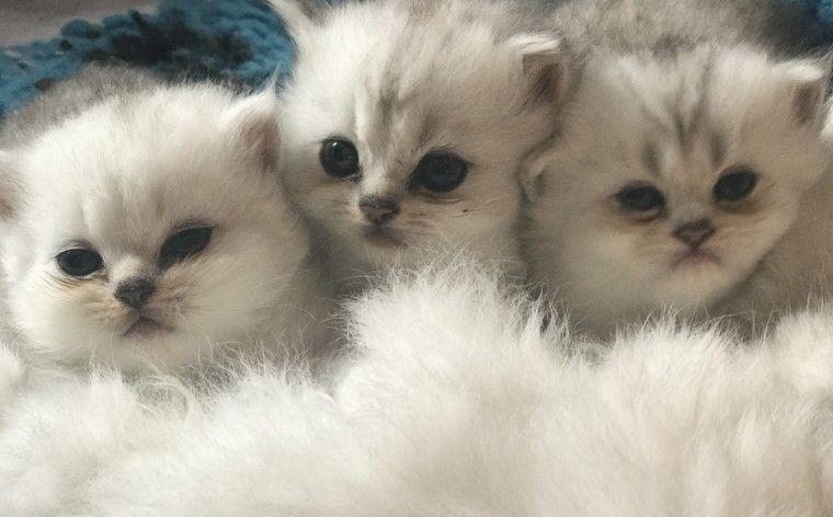 Cats Adaptation To New Homes
