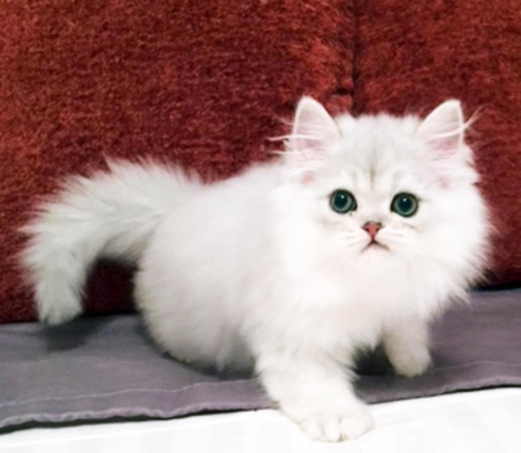 cat shaking tail
