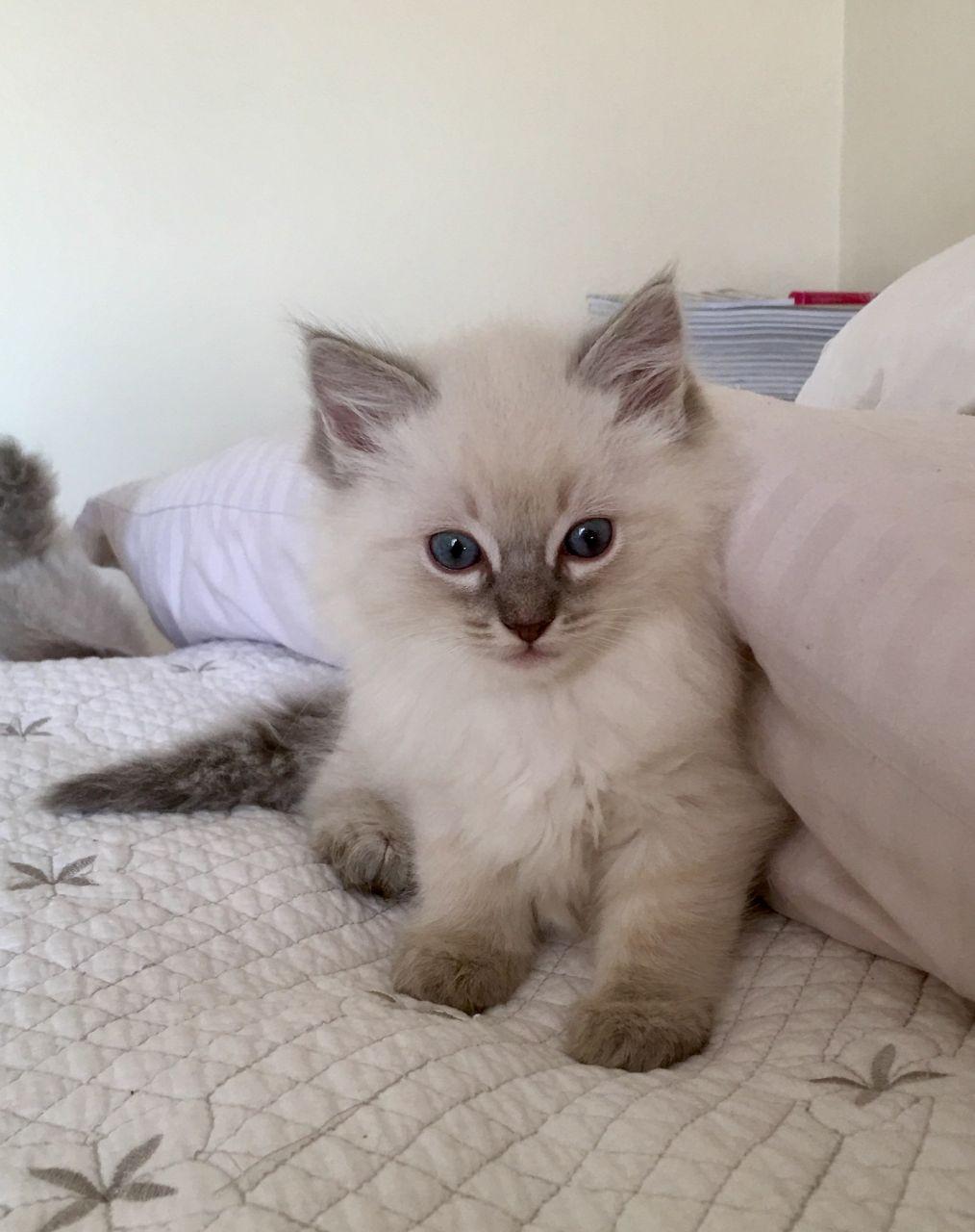 beautiful photos of cats