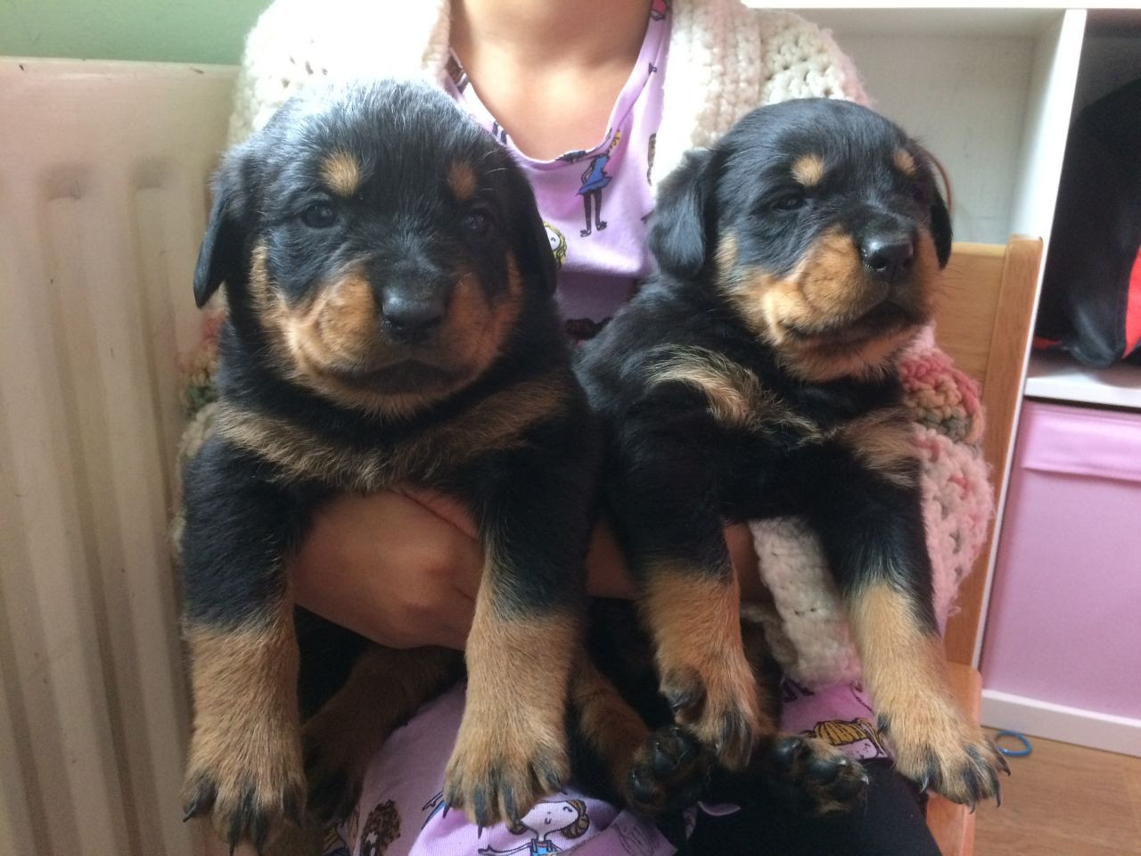 My Friends Told Me About You / Guide rottweiler puppies for