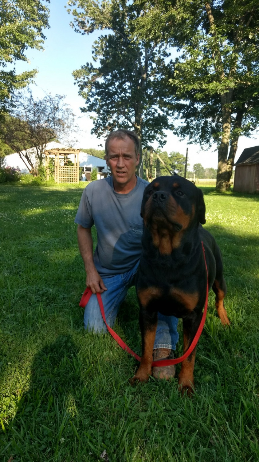 Rottweiler puppies for sale cincinnati oh 273809 for Dog kennels for sale in ohio