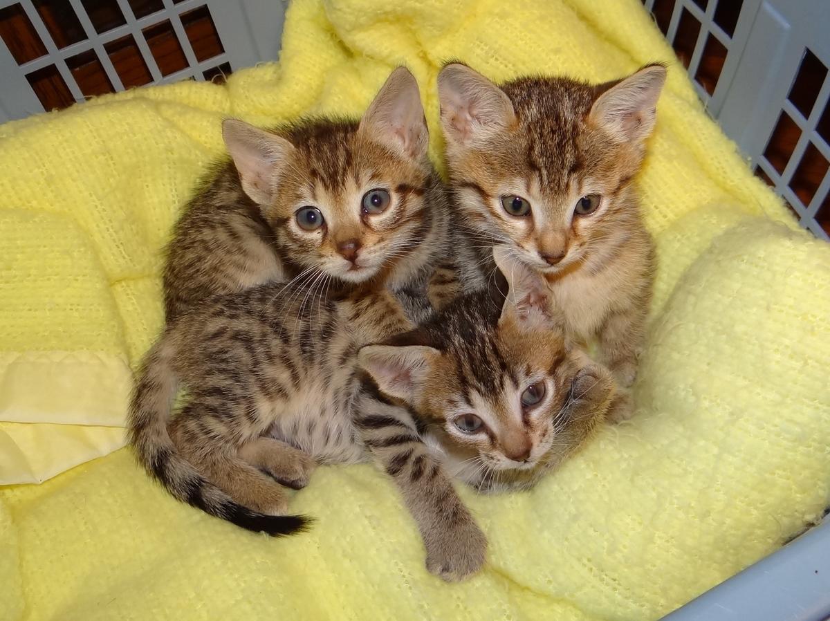big cat rescue tampa scandal