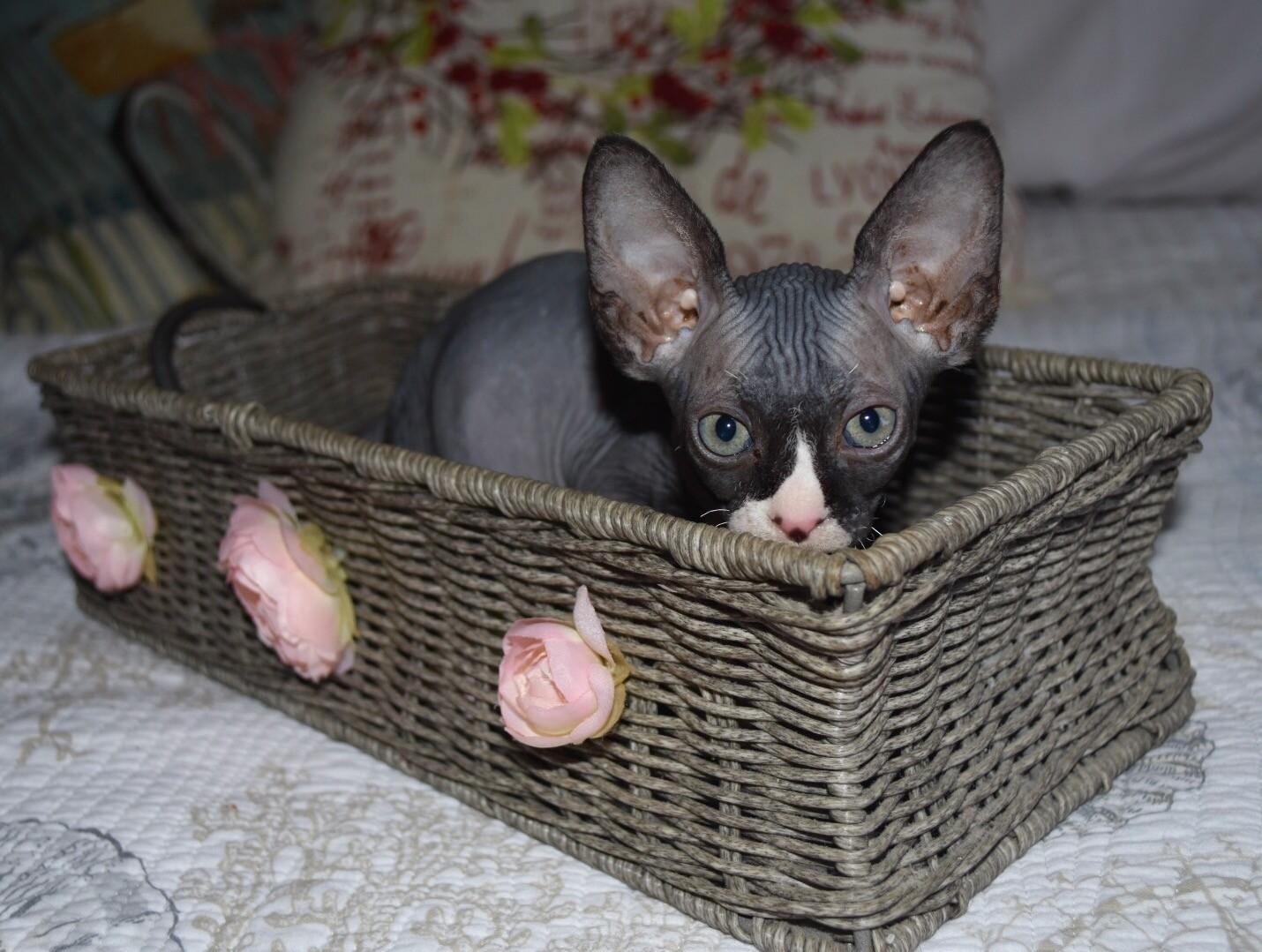 kittens house