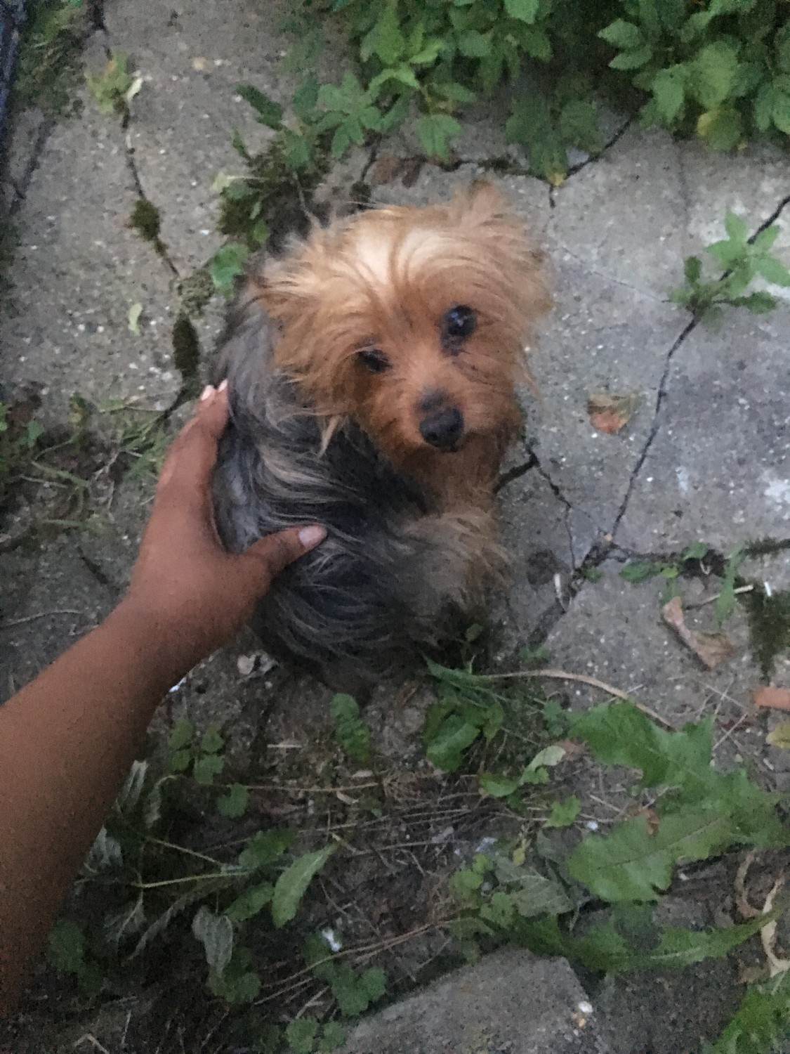 yorkie puppies for sale wilmington nc yorkshire terrier puppies for sale wilmington de 224422 4192