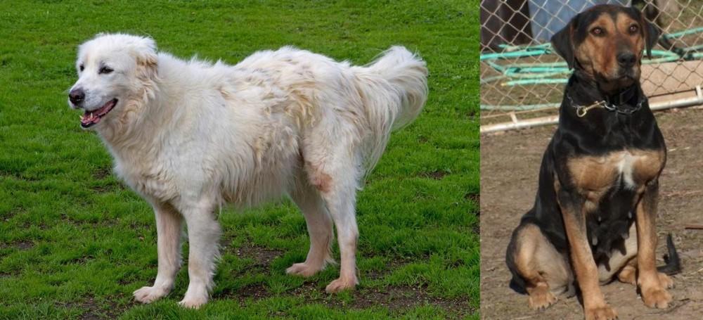 New Zealand Huntaway vs Abruzzenhund