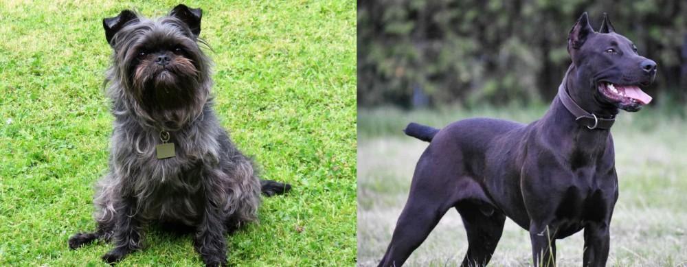 Canis Panther vs Affenpinscher