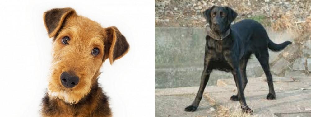 Cao de Castro Laboreiro vs Airedale Terrier