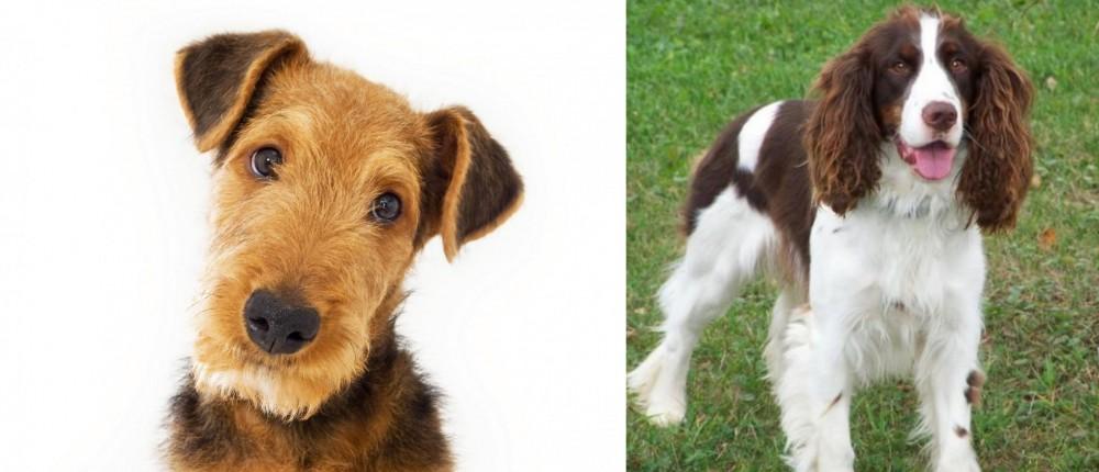 English Springer Spaniel vs Airedale Terrier