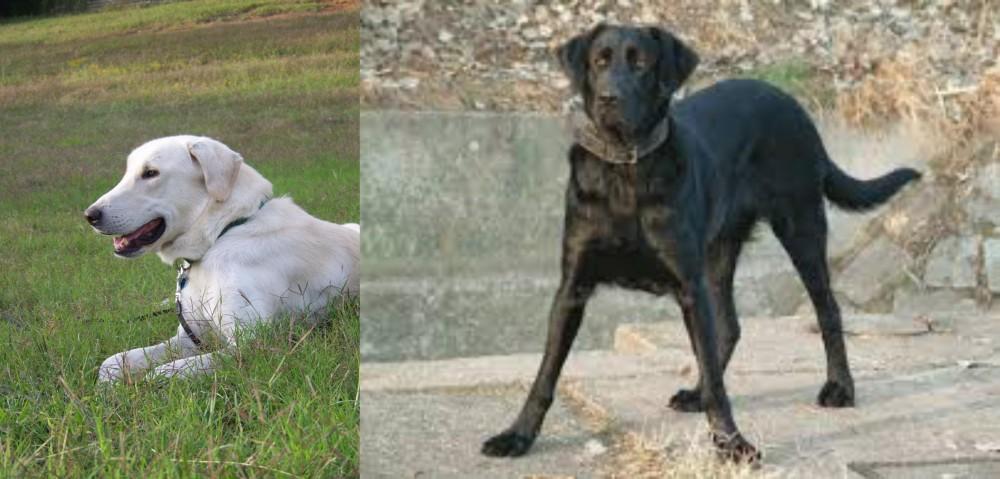 Cao de Castro Laboreiro vs Akbash Dog