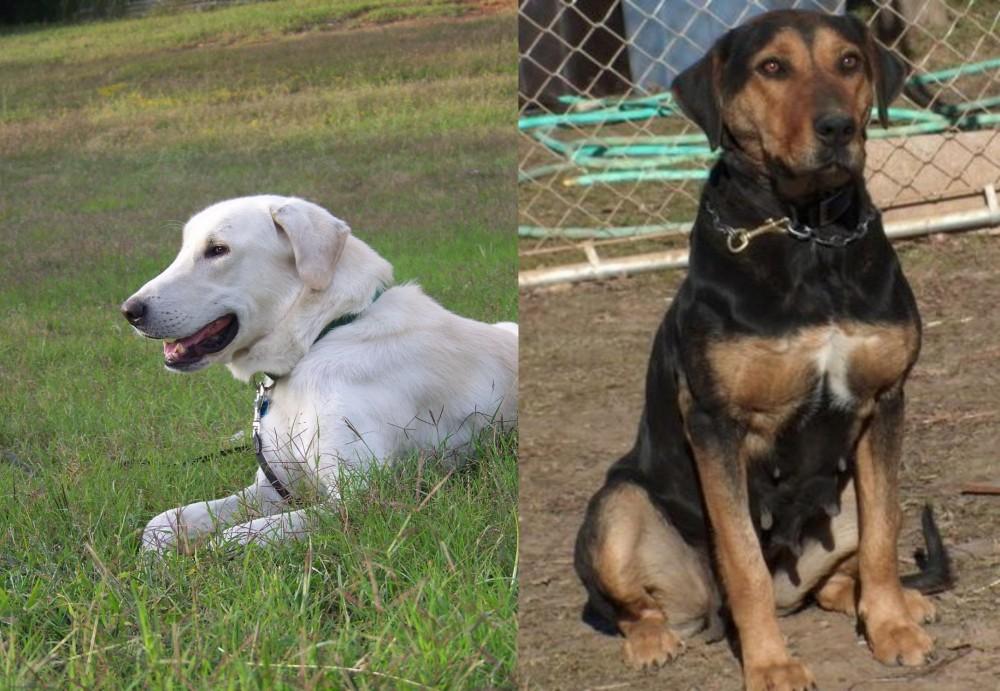 New Zealand Huntaway vs Akbash Dog
