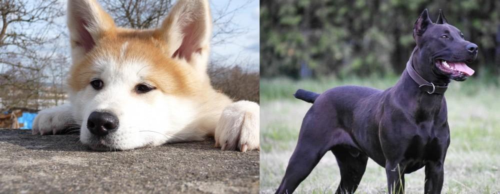 Canis Panther vs Akita