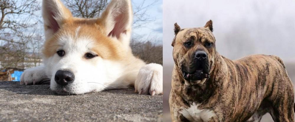 Perro de Presa Canario vs Akita