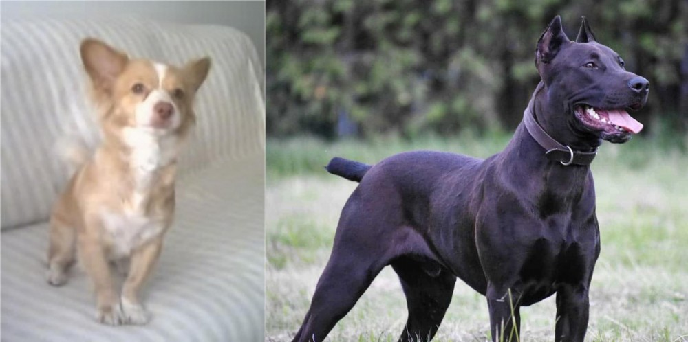 Canis Panther vs Alopekis