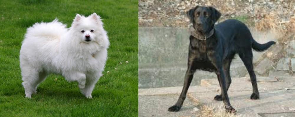 Cao de Castro Laboreiro vs American Eskimo Dog