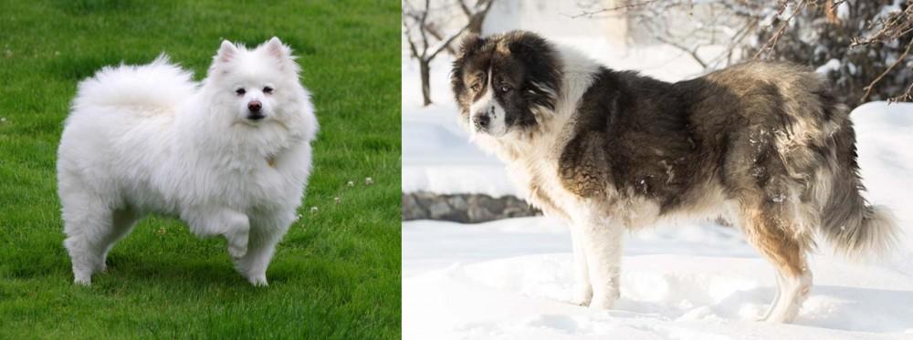 Caucasian Shepherd vs American Eskimo Dog