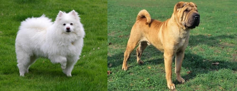 Chinese Shar Pei vs American Eskimo Dog