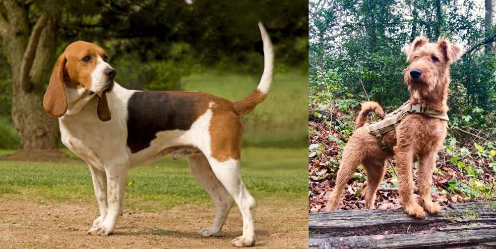 Irish Terrier vs Artois Hound