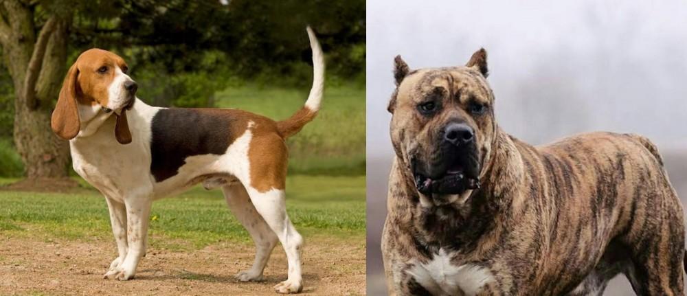 Perro de Presa Canario vs Artois Hound