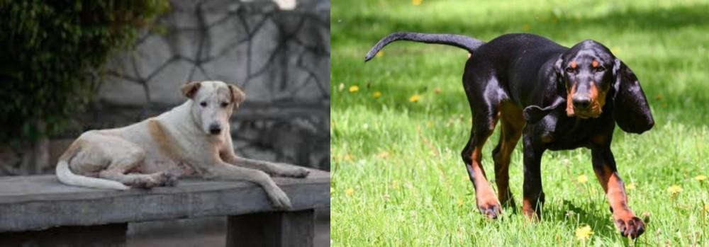Black and Tan Coonhound vs Askal