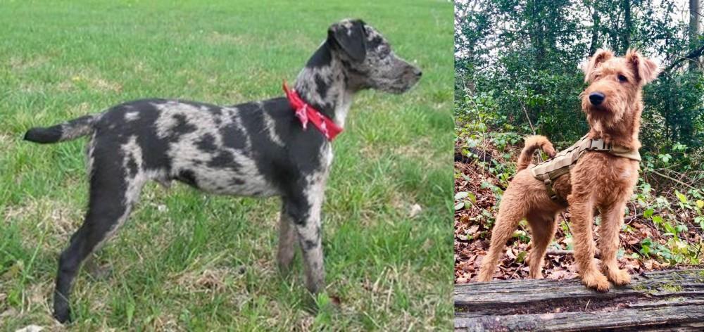 Irish Terrier vs Atlas Terrier