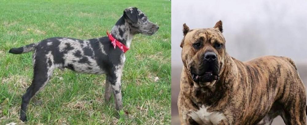 Perro de Presa Canario vs Atlas Terrier