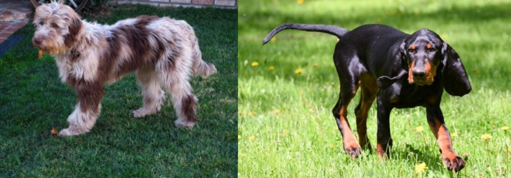Black and Tan Coonhound vs Aussie Doodles
