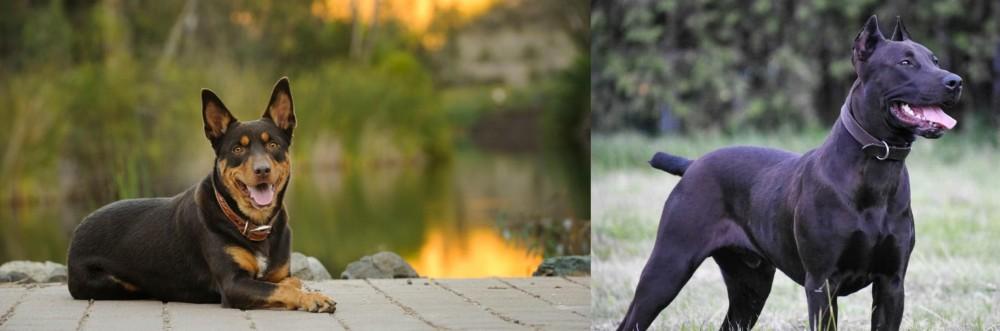 Canis Panther vs Australian Kelpie