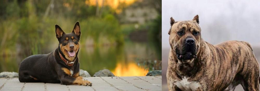 Perro de Presa Canario vs Australian Kelpie
