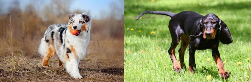 Black and Tan Coonhound vs Australian Shepherd