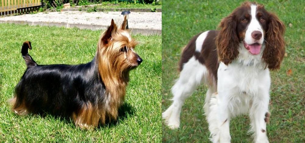 English Springer Spaniel vs Australian Silky Terrier