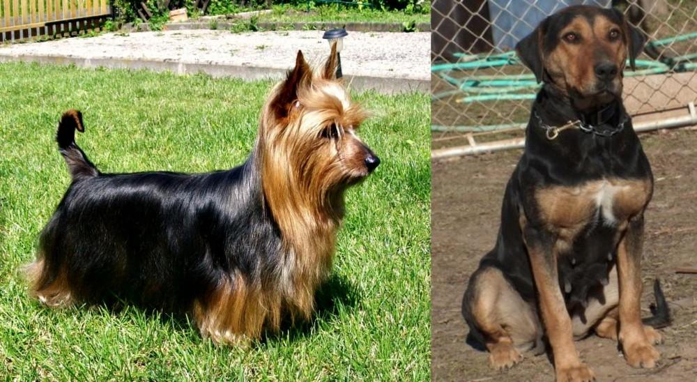 New Zealand Huntaway vs Australian Silky Terrier